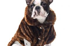 одежда для животных2