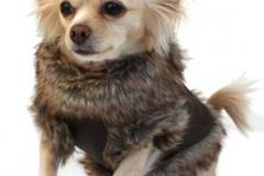 одежда для животных4