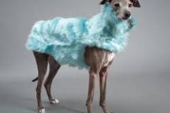 одежда для животных5