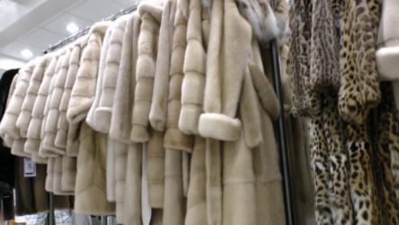 Лучшие меховые фабрики и магазины Касторьи