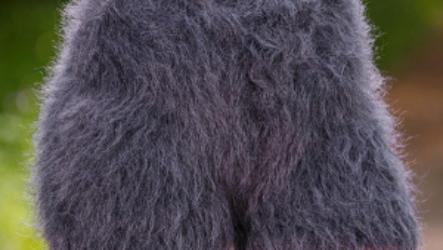 Меховые трусы и стринги – практичная вещь или очередной писк моды?